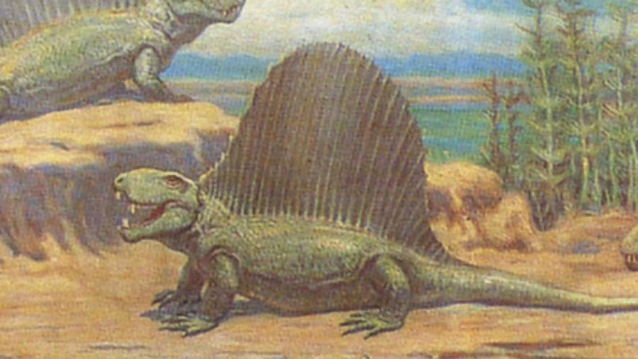 Knight - dimetrodon, detail