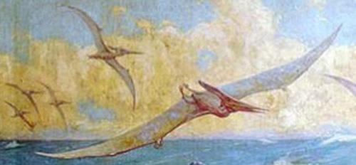 pteranodon, detail