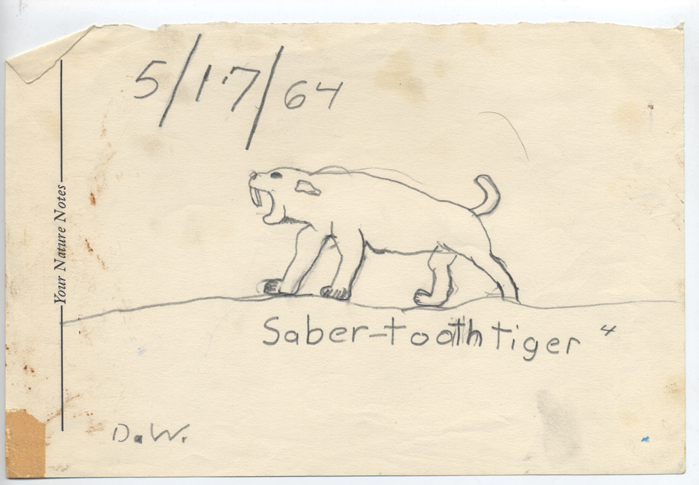 saber tooth