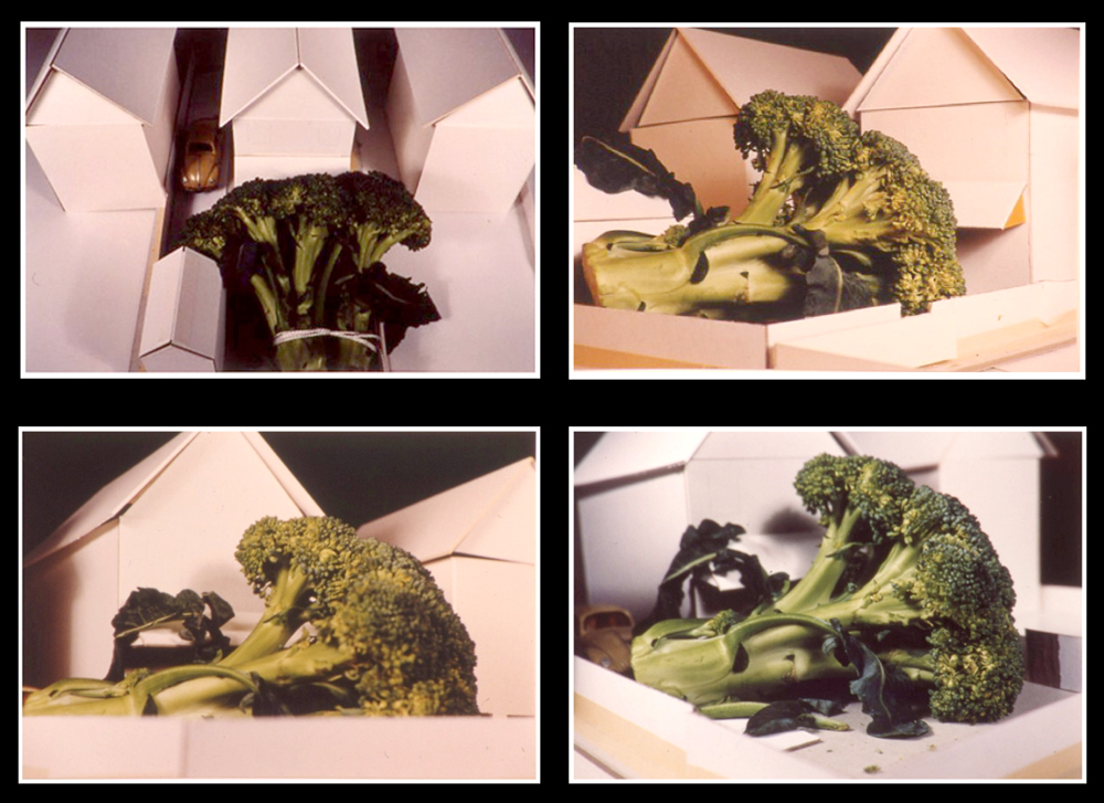 Broccoli models